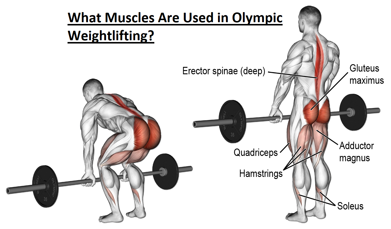 What Muscles Are Used in Olympic Weightlifting.